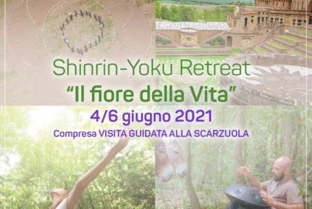 Shinrin-Yoku: il Bagno di Foresta